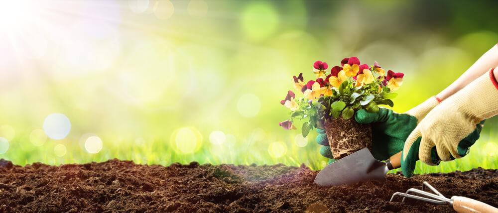 garden landscaping design in-ground